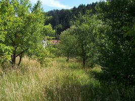 Foto 4 1-2 Familienhaus mit grossem Garten