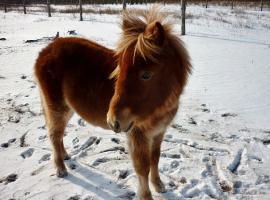 1 Jahr alte Pony, sehr lieb und anhänglich