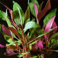 10 Aquarienpflanzen für 10 €