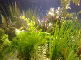 10 Bund schnellwachsende Wasserpflanzen gegen Algen