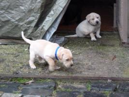 Foto 3 10 Hundebabies