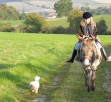 Foto 6 10-jährige Eselstute/ Riesenesel, geritten
