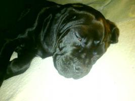 10 mon alter Beaglemix (schwarz)