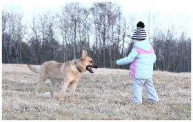 Foto 2 11-12 monat alte familien hund
