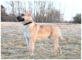 Foto 4 11-12 monat alte familien hund
