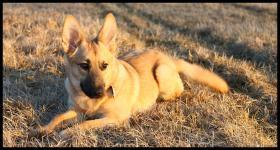 Foto 6 11-12 monat alte familien hund