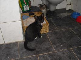 Foto 2 11 wochen alte katzenbabys