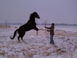 12.-14.07.2013 Schluss mit der Angst im Umgang mit Pferden