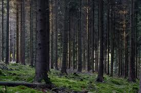 Foto 2 1428 Hektar Nadewald in Nordrumänien zu verkaufen,