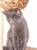 Foto 3 16 wochen altes katzenpersermix Mätchen sucht liebevolles zu hause .