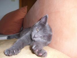 Foto 5 16 wochen altes katzenpersermix Mätchen sucht liebevolles zu hause .