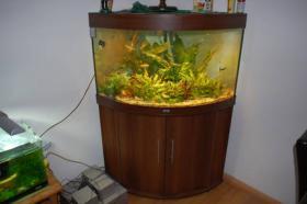 190l Juwel Eckaquarium mit Fischbesatz