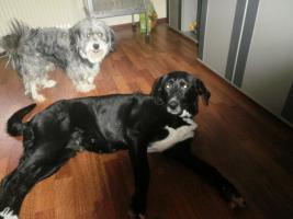 1Mischlingshund  ''9 Jahre