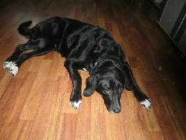 Foto 2 1Mischlingshund  ''9 Jahre
