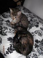 Foto 5 2 1/2 Monate altes Kätzchen sucht neues zuhause.