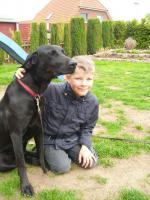 Foto 2 2 1/2 jähr. schwarze Labrador-Mix-Hündin zu VERSCHENKEN
