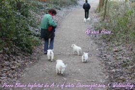 Foto 4 2 von 9 Weisse Sch�ferhund Welpen suchen noch neues Frauchen/Herrchen