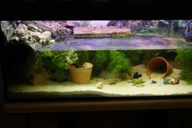 2 Aquarien, Unterschrank, JBL Filter, UV Lampe, Hei�stab&viel Zubeh�r!!!