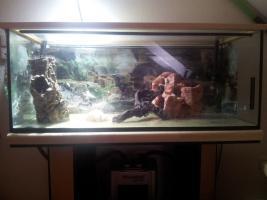 Foto 3 2 Aquarien, Unterschrank, JBL Filter, UV Lampe, Hei�stab&viel Zubeh�r!!!