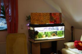 Foto 5 2 Aquarien, Unterschrank, JBL Filter, UV Lampe, Hei�stab&viel Zubeh�r!!!