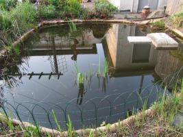 Foto 4 2 Gartenteiche, Goldfische, Filteranlagen inkl. UVC-Licht, Saugpumpen