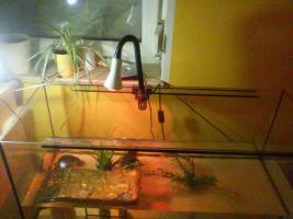 2 Gelbwangenschmuckschildkröten + Zubehör