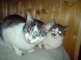 2 Geschwister Katzen verschmust suchen liebevolles Zuhause
