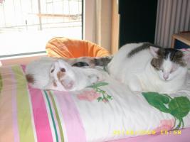 Foto 2 2 Hauskatzen