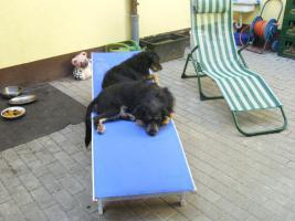 Foto 2 2 Hunde