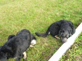 Foto 3 2 Hunde