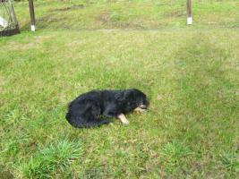 Foto 4 2 Hunde