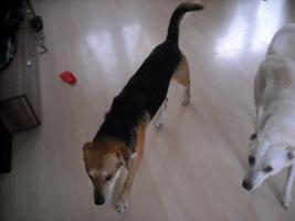 2 Hunde Mischlinge