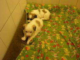 Foto 3 2 Hundewelpen