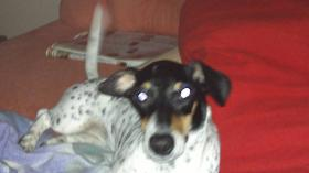 Foto 3 2 Jährige Terrier Mischling Hündin