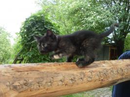 Foto 2 2 Kätzchen