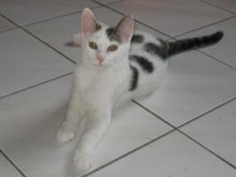 2 Kätzchen 4 Mo. alt