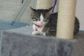 Foto 6 2 Kätzchen suchen ein liebevolles zuhause 13-15 Wochen jung