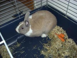 Foto 2 2 Kaninchen