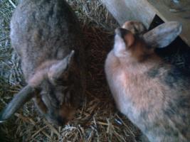 2 Kaninchen abzugeben