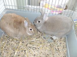 2 Kaninchen männl. zu Verkaufen!