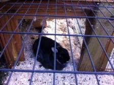 2 Kaninchen zu verschenken incl. Haus u. Gehege