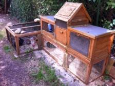 Foto 2 2 Kaninchen zu verschenken incl. Haus u. Gehege