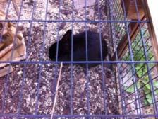 Foto 3 2 Kaninchen zu verschenken incl. Haus u. Gehege