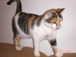 Foto 2 2 Katzen