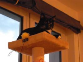 Foto 3 2 Katzen