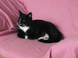 Foto 4 2 Katzen