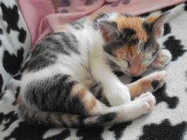 Foto 5 2 Katzen