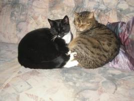 Foto 2 2 Katzen abzugeben