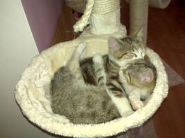 2 Katzen noch nicht ausgewachsen ( 3 monate)