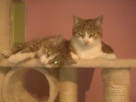 Foto 2 2 Katzen noch nicht ausgewachsen ( 3 monate)